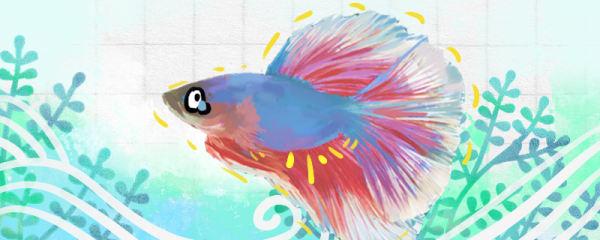 斗鱼没精神老趴在水底是什么原因,怎么治疗