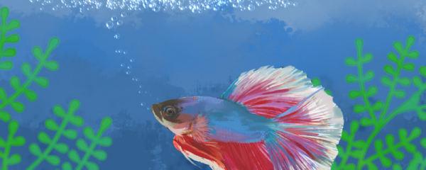 斗鱼卵多久孵化出小鱼,孵出的小鱼怎么养
