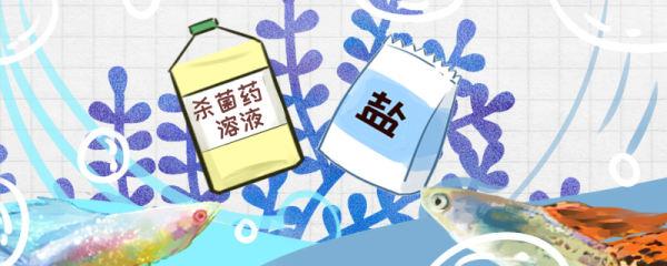 孔雀鱼有白点病怎么治疗,常见病的治疗方法