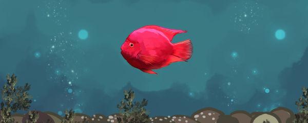 鹦鹉鱼产卵了怎么办,能繁殖吗