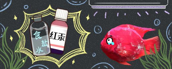 鹦鹉鱼身上有白霜怎么治疗,用什么药效果好