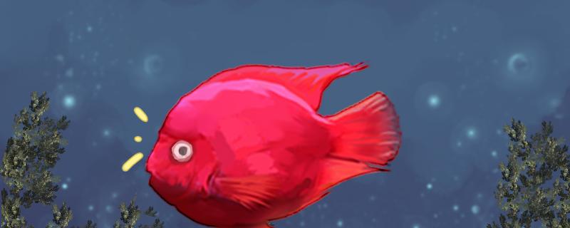 鹦鹉鱼眼睛凸出来是什么病,眼睛凸起怎么治