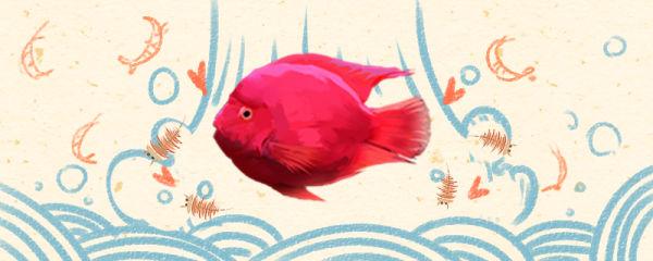 鹦鹉鱼怎么养,换水的正确方法