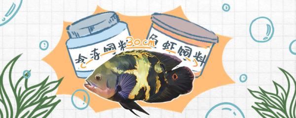 地图鱼能长多大,吃什么长得快