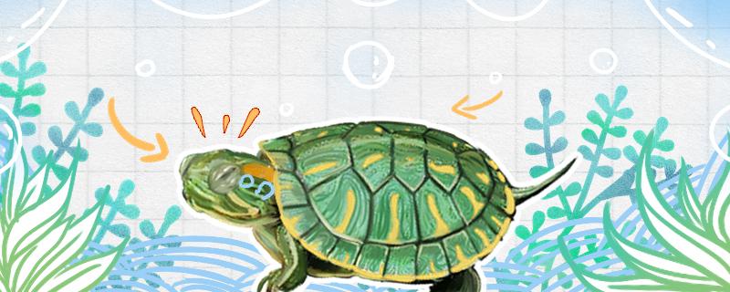 巴西龟眼睛肿了睁不开是什么原因,怎么处理-轻博客