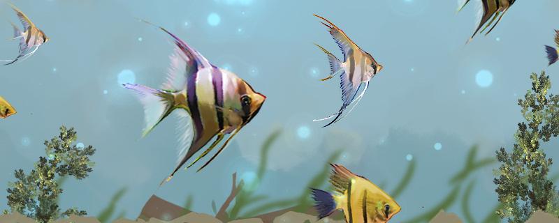 养神仙鱼用打氧么,要经常换水吗