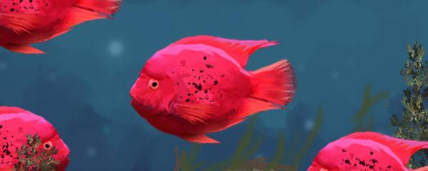 鹦鹉鱼怎么起头快,起头需要多长时间