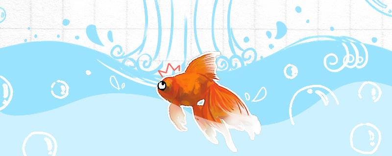 金鱼几天换一次水好,换水技巧介绍