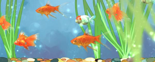金鱼鱼缸怎么布景,鱼缸底部铺什么好