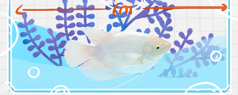养招财鱼需要多大的鱼缸,用什么鱼缸好