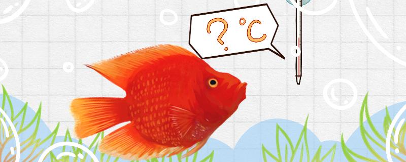 财神鱼是热带鱼吗,水温多少最合适