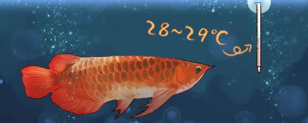 龙鱼是热带鱼吗,用多少度的水养好