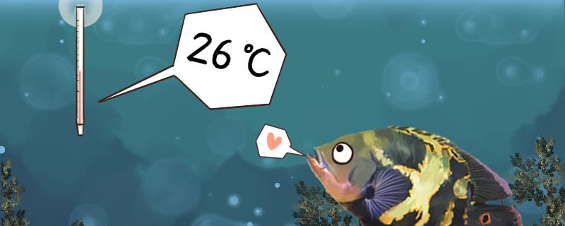 养地图鱼需要注意什么,怎么养才不会死
