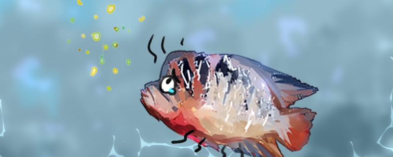 罗汉鱼吃什么起头快,不起头怎么办-轻博客