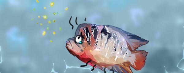罗汉鱼吃什么起头快,不起头怎么办