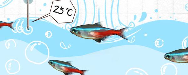 红绿灯鱼需要加热棒吗,需要增氧吗