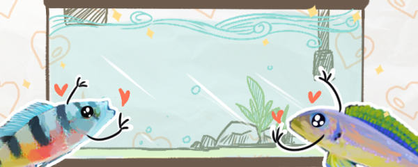 三湖慈鲷用什么底砂,用什么灯