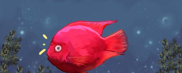 鹦鹉鱼眼睛凸是什么原因,用什么药治