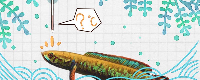 七彩雷龙鱼需要加温吗,水温多少合适