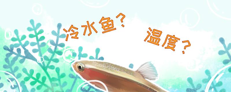 白云金丝是冷水鱼吗,最低水温多少