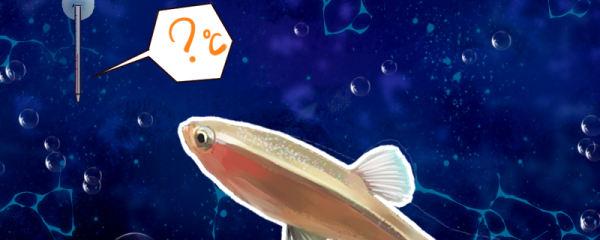 白云金丝鱼水温多少度合适,需要加热棒吗