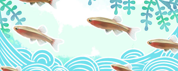 白云金丝鱼要求氧气多吗,需要打氧气吗