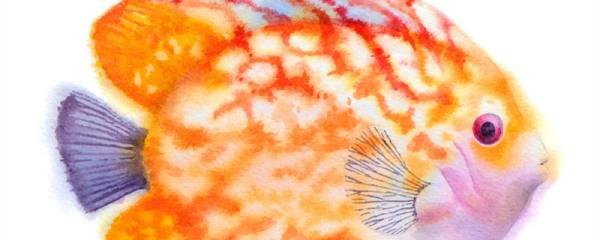 七彩神仙鱼几个月性成熟,一年可以繁殖几次