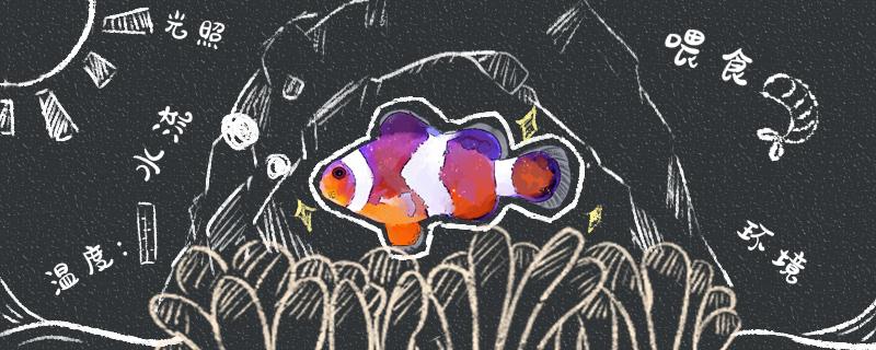 小丑鱼好养吗,怎么养