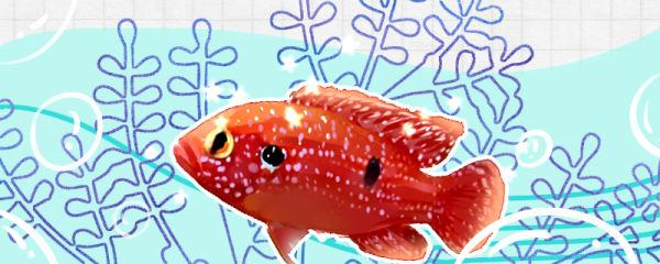 红宝石鱼怎么变红,颜色变暗了怎么办