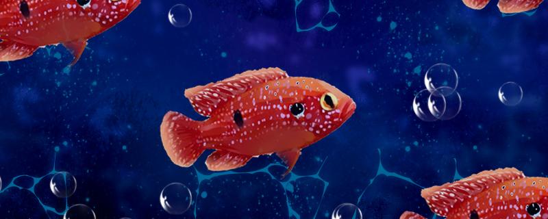 红宝石鱼好养吗,怎么养