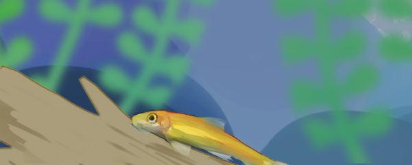 金苔鼠吃小鱼吗,可以和小型热带鱼混养吗