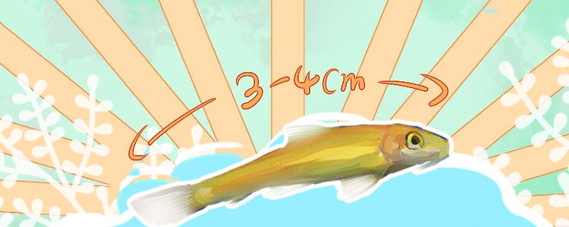 金苔鼠能长多大,能活多久