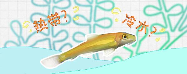 金苔鼠是冷水鱼吗,水温多少度合适