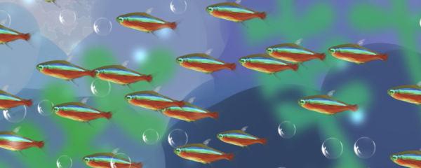 宝莲灯鱼不群游怎么办,怎么才会群游