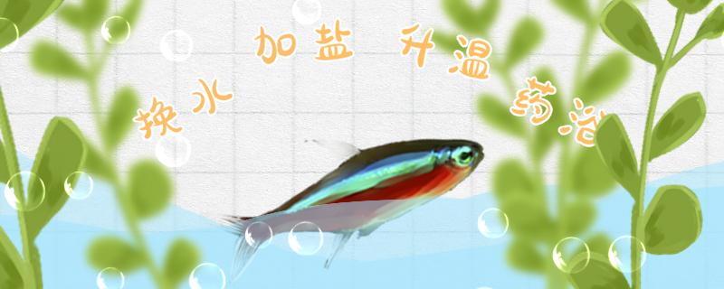 宝莲灯鱼常见病有哪些,得病了怎么治