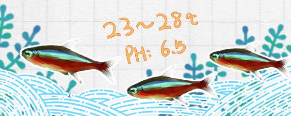 宝莲灯鱼水温多少合适,多久换一次水