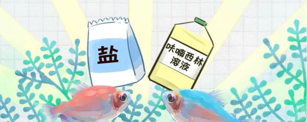 彩裙鱼常见病有哪些,疾病怎么治疗