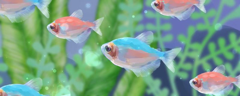 彩裙鱼好养吗,怎么养