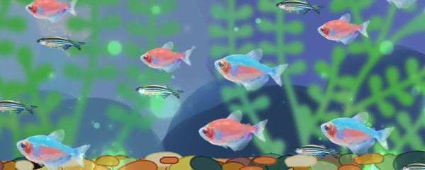 彩裙鱼能和什么鱼混养,混养时有什么注意事项