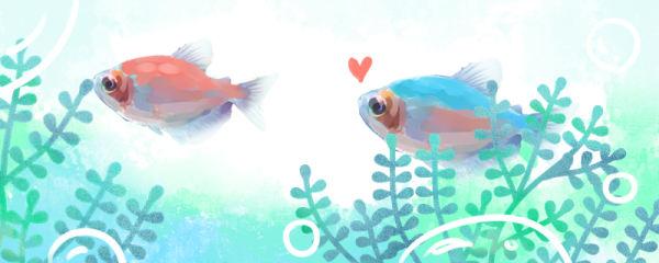 彩裙鱼能活多久,如何繁殖