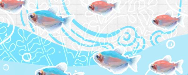 彩裙鱼温度多少合适,如何换水