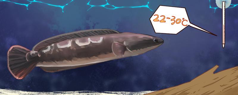 大铅笔鱼多大开始发色,怎么养出状态