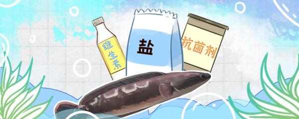 大铅笔鱼容易得白点病吗,得白点病怎么治疗