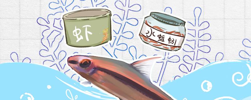 一眉道人吃虾吗,吃小鱼吗