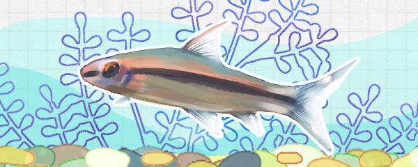一眉道人鱼好养吗,怎么养