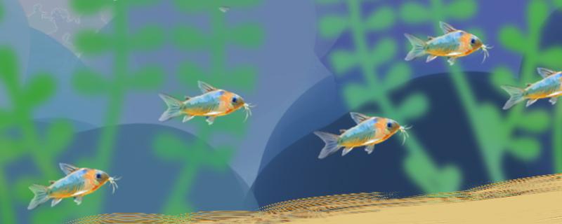 鼠鱼繁殖需要些什么,怎么繁殖