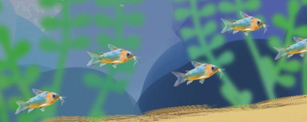 鼠鱼用什么底沙最好,用多细的沙好