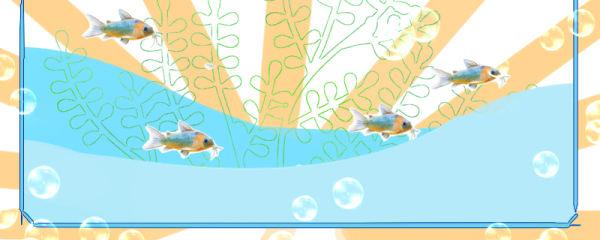鼠鱼是什么鱼,有清缸作用吗