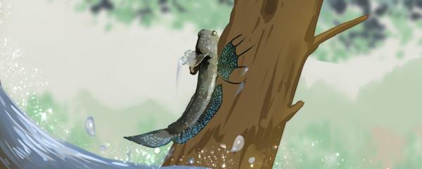 弹涂鱼为什么能离开水,会上树吗