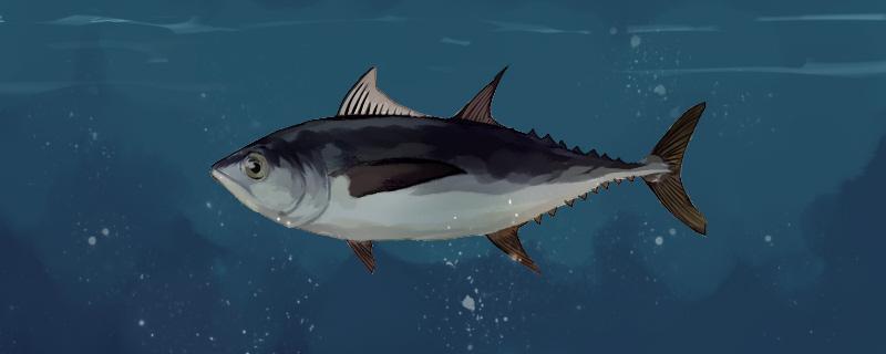 金枪鱼游得快吗,为什么要一直游